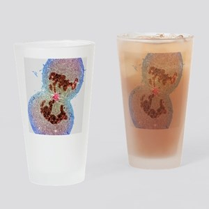 Cell division Drinking Glass