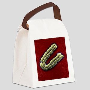 Chromosome, SEM Canvas Lunch Bag