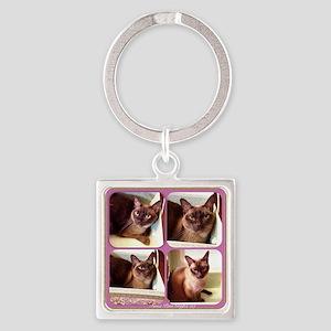 Champagne Burmese box cat x4 Square Keychain