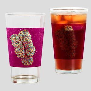 Chromosome, SEM Drinking Glass