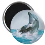 Bubble Dolphin Magnet