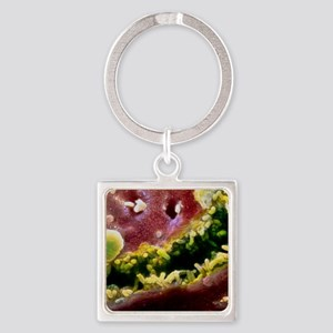 Coloured SEM of a bile canaliculus Square Keychain