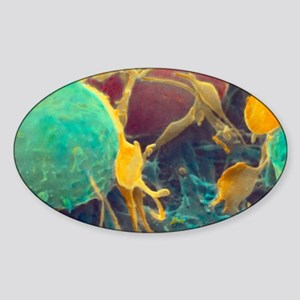 Coloured SEM of activated platelets Sticker (Oval)