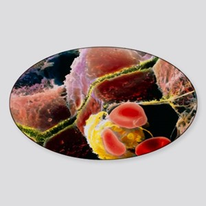 Coloured SEM of liver cells and bil Sticker (Oval)