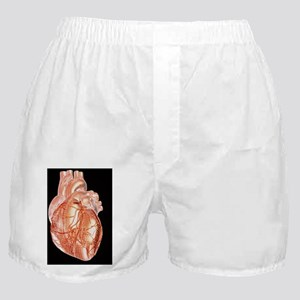 Computer artwork of a healthy human h Boxer Shorts