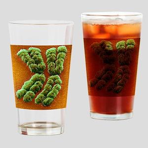 Doubled chromosome, SEM Drinking Glass