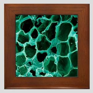 Empty fat cells, SEM Framed Tile