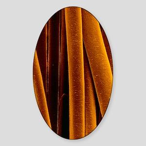 False-colour SEM of human hair afte Sticker (Oval)