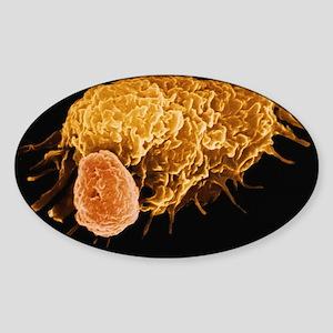 False-colour SEM of a macrophage Sticker (Oval)