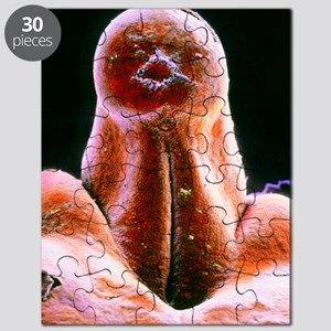 False-colour SEM of external genitalia in e Puzzle