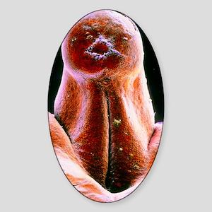 False-colour SEM of external genita Sticker (Oval)