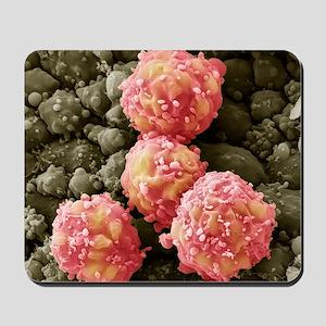 Foetal blood stem cells, SEM Mousepad