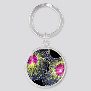 Fibroblast cells showing cytoskelet Round Keychain