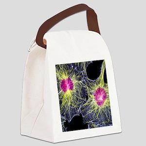 Fibroblast cells showing cytoskel Canvas Lunch Bag