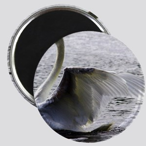 Swan Calendar January Magnet