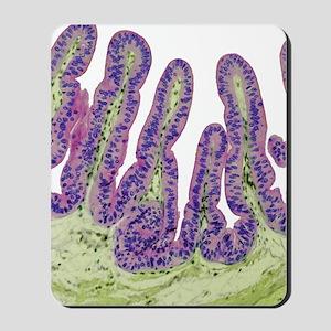 Gall bladder surface, light micrograph Mousepad