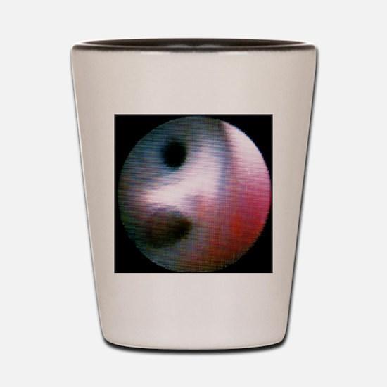 Healthy milk ducts Shot Glass