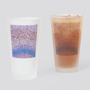 Hippocampus brain tissue Drinking Glass