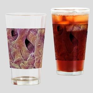 Heart valve tendons, SEM Drinking Glass