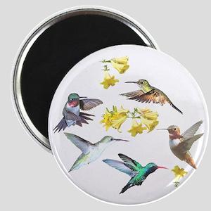 HUMMINGBIRDS AND TRUMPET PLANT Magnet
