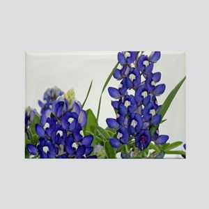 Texas bluebonnet Rectangle Magnet