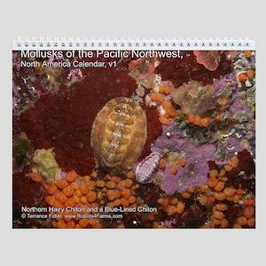 Mollusks of the North Pacific 2013 Calendar v1