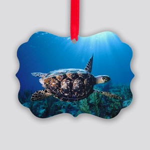 A turtle in the sun Picture Ornament