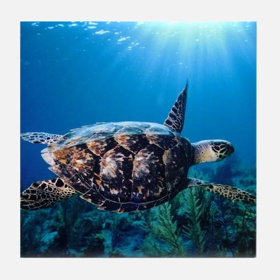 A turtle in the sun Tile Coaster