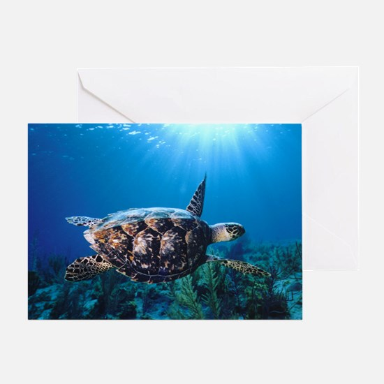 A turtle in the sun Greeting Card
