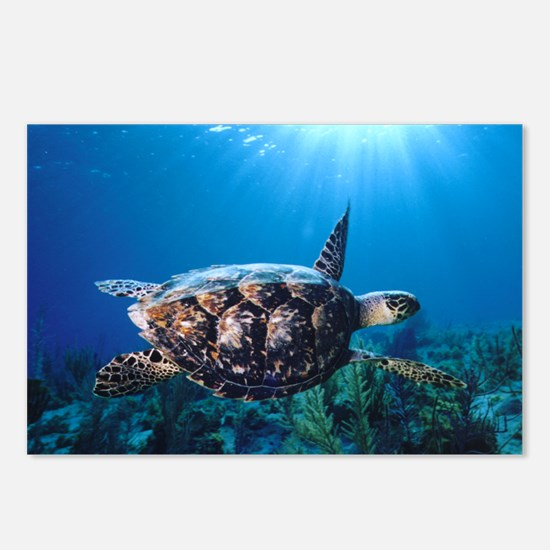 A turtle in the sun Postcards (Package of 8)