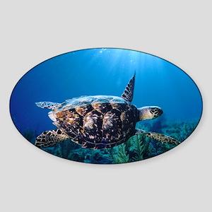 A turtle in the sun Sticker (Oval)