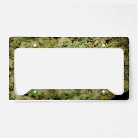Cannabis II License Plate Holder