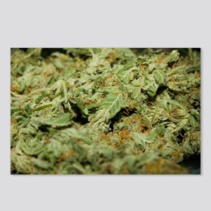 Cannabis II Postcards (Package of 8)