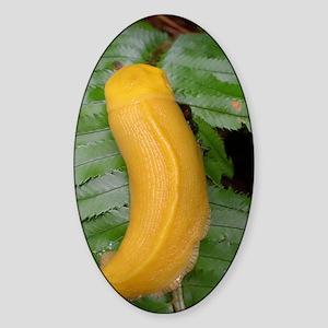 Banana Slug Sticker (Oval)