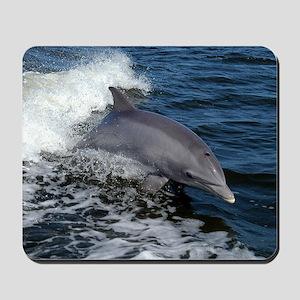 Bottlenose dolphin Mousepad