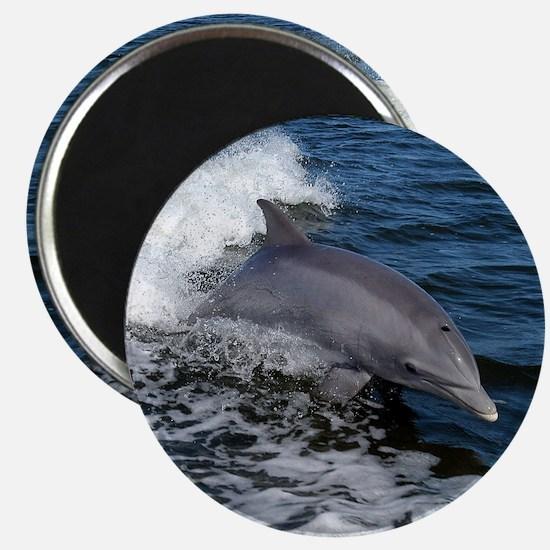 Bottlenose dolphin Magnet