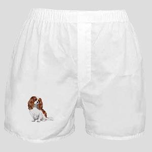 Cavalier (blenheim2) Boxer Shorts