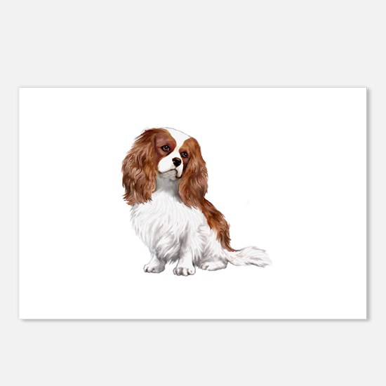Cavalier (blenheim2) Postcards (Package of 8)