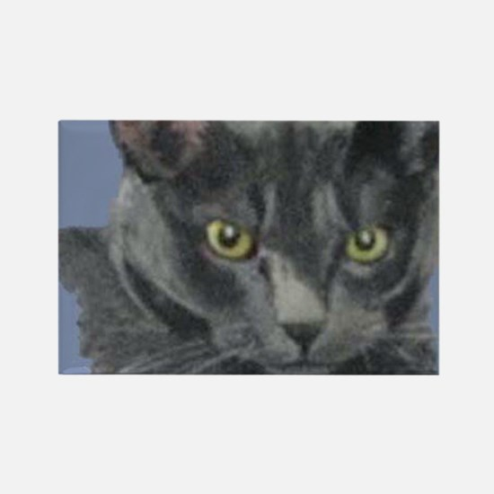 American Shorthair Gray Cat Rectangle Magnet