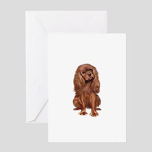 Ruby Cavalier 1 Greeting Card