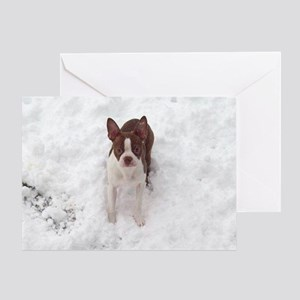 Red Boston Terrier Greeting Card