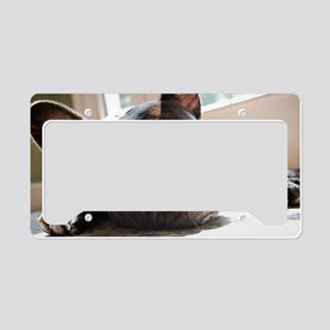 frenchie License Plate Holder