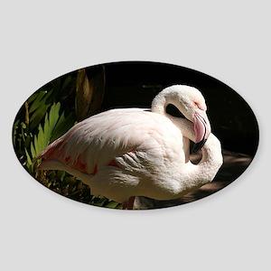 Flamingo at the zoo Sticker