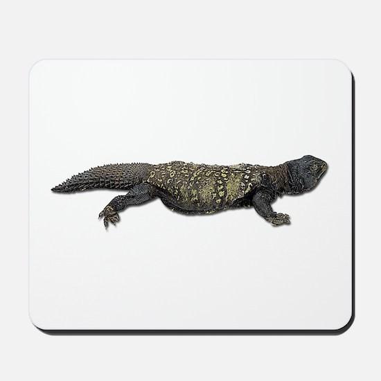 Mali Uromastyx Photo Mousepad