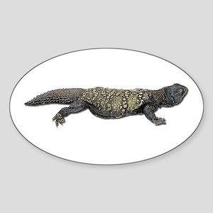 Mali Uromastyx Photo Oval Sticker