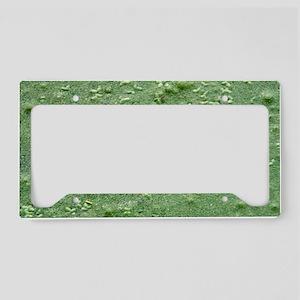 Ribbit License Plate Holder