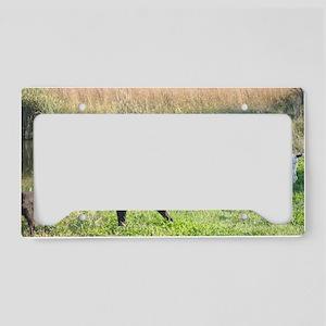GWP License Plate Holder