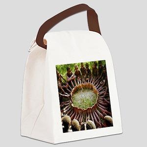 SF Ubuntu Canvas Lunch Bag