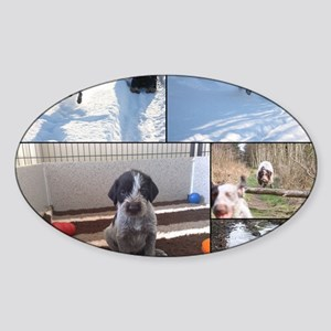 german wirehaired pointers Sticker (Oval)