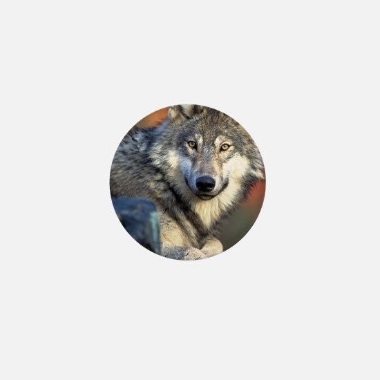 Awesome Gray Wolf Mini Button